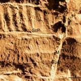 Descubren un insecto en forma de hoja que vivió hace 270 millones de años