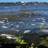 Peces muertos siguen sin ser retirados  del lago El Cisne
