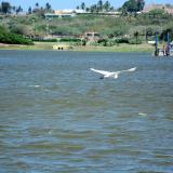 """""""El Cisne solo quedó para mirar el paisaje"""", dicen expertos"""