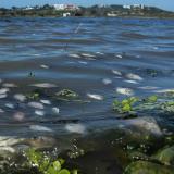 Estudio del ICA revela presencia de coliformes y otras bacterias en El Cisne