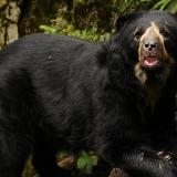 Repudio por asesinato de oso andino cerca del Parque Chingaza