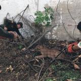 Puma causa pánico en el centro de Riohacha