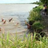 Rescatan cuerpo que flotó durante siete días en el río Magdalena