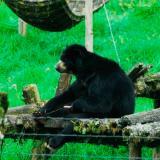 Oso 'Chucho' no puede ser liberado bajo ninguna circunstancia: Zoo de Barranquilla