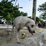 Recogida de perros en los alrededores del 'Metro' revive la osadía de Droopy