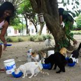 Las tres mujeres que asumieron el cuidado de los gatos manifiestan que hacen esta labor por amor y no por obligación.