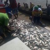 En San Jorge se multiplicaron los peces