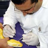 El oftalmólogo veterinario operó de emergencia a una boa constrictor hace unos años.