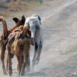 """Rusia estaría matando perros callejeros para """"limpiar"""" ciudades sedes del Mundial: animalistas"""