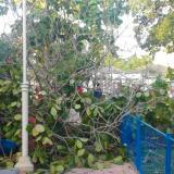 Reportan caída de árbol en el parque Eugenio Macías