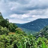Límites de las reservas forestales regionales estarán a cargo de las CAR