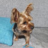 Mascotas Wasapea | Ayúdanos a encontrar a 'Yordi'