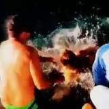 En video   El susto que se llevó una mujer al darle de comer a cuatro tiburones