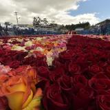 Detalle del camino de rosas que lleva a la pirámide floral.
