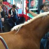 Joven jinete sube a un tren en Austria junto a su caballo