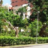 Tala de árboles indigna a vecinos de bulevar en Villa Country