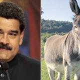 En video | Por comparar a Maduro con un burro, detienen a bombero venezolano