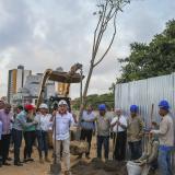 Con siembra de acacia roja, dan inicio a obras de ampliación de la Plaza de la Paz