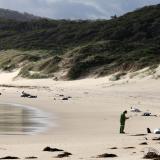 Hallan 28 ballenas muertas en playa de Australia
