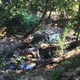 Así se ve el cauce del arroyo en el Jardín Botánico.