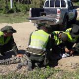Autoridades ambientales rescatan caimán aguja en Puerto Colombia