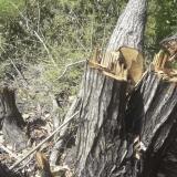 Tala de árboles en la ciénaga de los Manatíes, este ecosistema conecta con la ciénaga de Mallorquín.