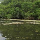 Alerta por mortandad de peces en ríos Fundación y Aracataca