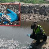 Un miembro de la Policía observa varios de los peces que amanecieron muertos en Sabanagrande.