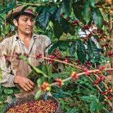 """Cafeteros de Colombia piden ayuda """"urgente"""" por caída de precios del grano"""