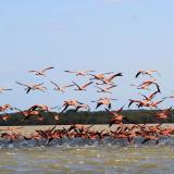 El Santuario de Los Flamencos, la 'perla' ambiental y cultural de La Guajira