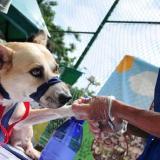 Jornada de salud animal este domingo en tres parques del norte