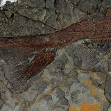 Hallan fósiles de peces que murieron hace  66 millones de años