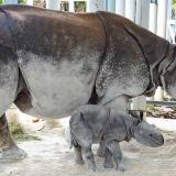 Nace primer rinoceronte indio por ovulación inducida e inseminación