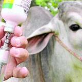 El compromiso de los ganaderos es fundamental. Se trabaja para recuperar estatus de Colombia como país libre de fiebre aftosa con vacunación.