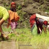 En video   Documental sobre el río Ganges hecho por cineastas colombianos