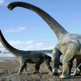 Identifican nueva especie de dinosaurios en Portugal