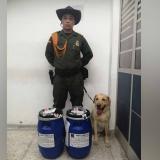 Perro antidrogas halla 50 kilos de clorhidrato de cocaína en aeropuerto de Santa Marta