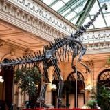 Fósil de un dinosaurio no encontró comprador en una subasta en París