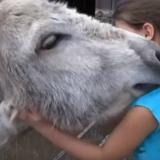 En video | La reacción de un burro al reencontrarse con la niña que lo crió