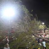 Queja por árbol caído en parque Sagrado Corazón