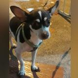 #DevuelvanATommy: sigue desaparecido el perro lazarillo de Soledad