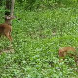 En reserva natural de Pivijay liberan venados amenazados