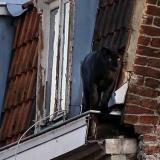 Residentes se espantan tras ver una pantera negra pasear por sus techos