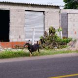 Granabastos reclama predio en Malambo que fue invadido
