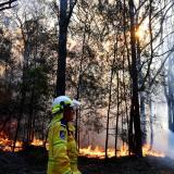Rescatan a dos koalas de un incendio en Australia pero otros cientos siguen en peligro