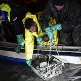 Gondoleros de Venecia se convierten en buzos para sacar basura de los canales