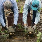En video | Morrocoyos, guacamayas y ñeques regresaron a su hábitat en el Cesar