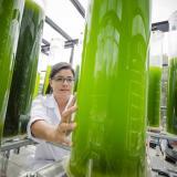 Investigadora del Centro Argos para la Innovación analizando las microalgas.