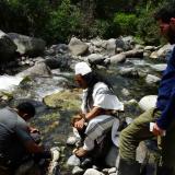 Hallan en la Sierra Nevada una rana sin registro científico hace 28 años