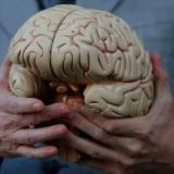 Estudio dice que inteligencia artificial podría ser clave en operaciones de tumores cerebrales